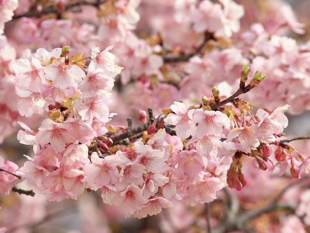 春がいっぱい♪