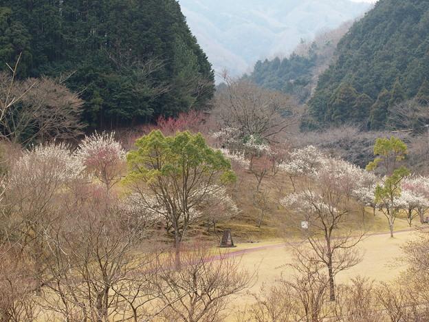 湖畔は梅花に満ち溢れ