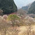 Photos: 湖畔は梅花に満ち溢れ
