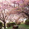 Photos: 小春日和