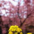 春の玉ボケ