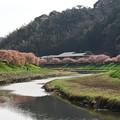 Photos: 川の流れのように