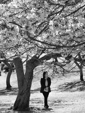 桜を愛でる人