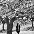 Photos: 桜を愛でる人