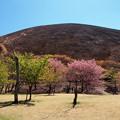大室山の麓に春は訪れ
