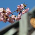 Photos: 春の青空と紋章と