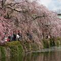Photos: 境内は春の香り