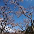 Photos: 春、青空の下