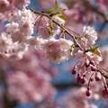Photos: 春の陽射しを受けて