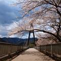 Photos: 奥野エコーブリッジの春