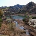 Photos: 湖畔の春