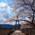 Photos: エコーブリッジに注ぐ陽光
