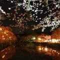 Photos: 平成最後の夜桜は…