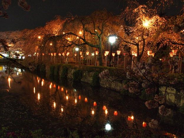 神池に映りし夜桜の…