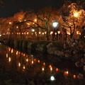 Photos: 神池に映りし夜桜の…