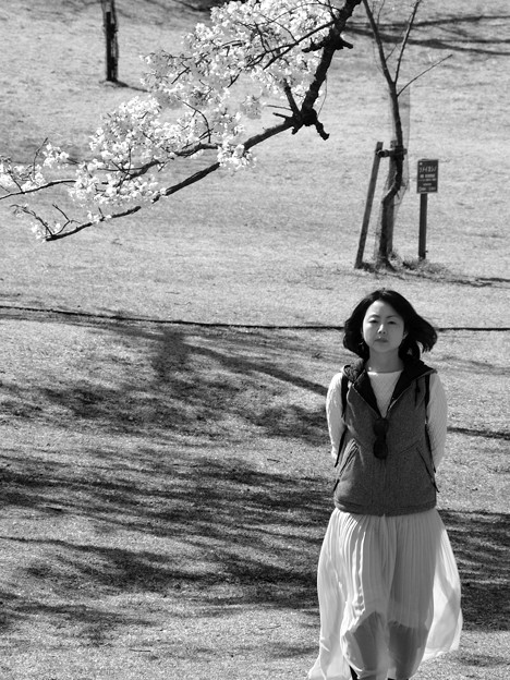Photos: 桜に誘われし…