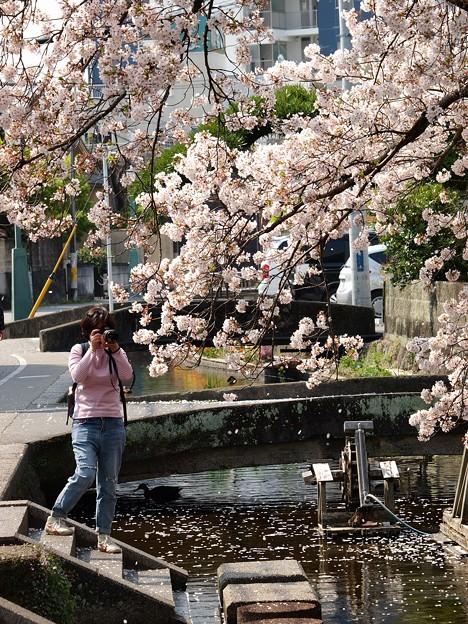 桜散る情景をパシャ~