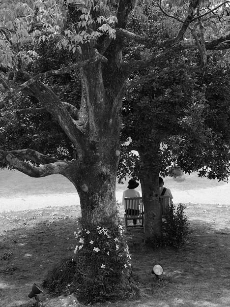 Photos: 休日の木陰