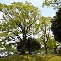 ガーデンの木陰で
