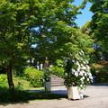 Photos: クレマチス咲くガーデン
