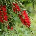 紅いブラシ Type-B