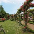 Photos: 初夏の日のローズガーデン
