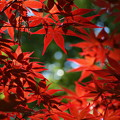 初夏の秋色
