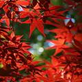 Photos: 初夏の秋色