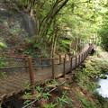 水辺の吊橋