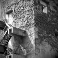 Photos: 壁を這う侵入者