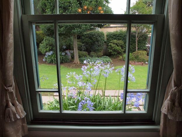 窓の外の夏花