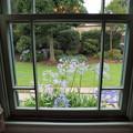 Photos: 窓の外の夏花
