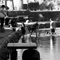 Photos: 水辺で戯れる -b