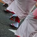 Photos: 踊る阿呆に撮る阿呆 2015