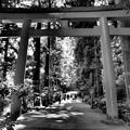 Photos: 箱根神社は避暑地に非ず…