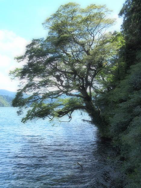 涼を求めて湖畔へ…