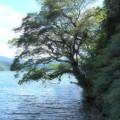 Photos: 涼を求めて湖畔へ…