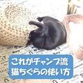 写真: 猫ちぐらの使い方4