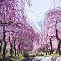 写真: 春の彩