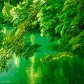 新緑輝く季節