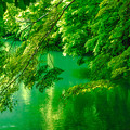 写真: 新緑輝く季節
