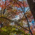 色鮮やかな秋の空