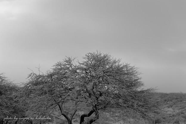 写真: 風景撮りの告白。#37