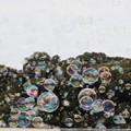 Photos: バブル