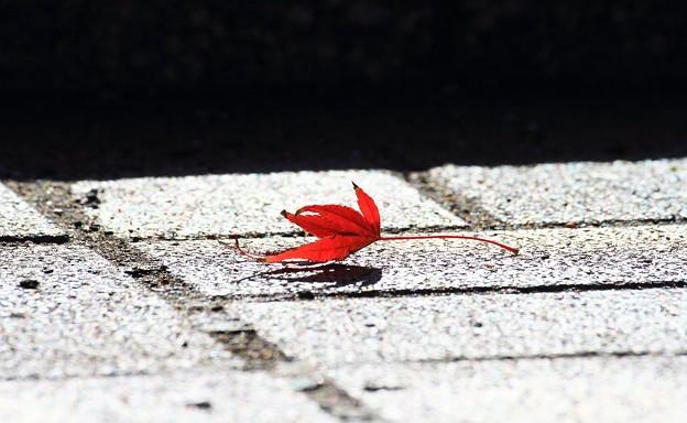 秋はひとりぼっち