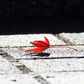 Photos: 秋はひとりぼっち