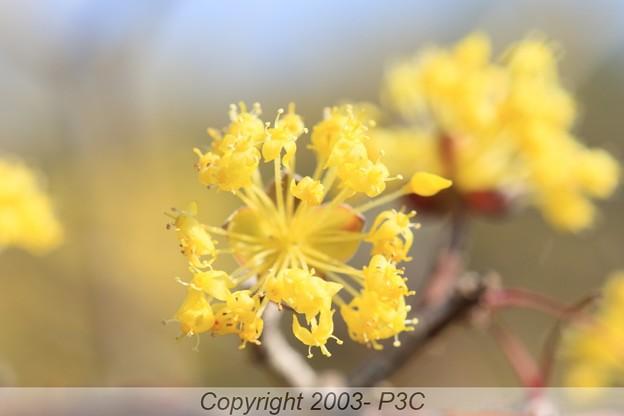 Photos: プチ幸せの黄色?