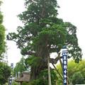 写真: 玉若酢命神社御霊会風流(6)H30,6,5