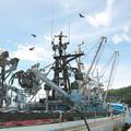 写真: 港の風景(9)H30.8.22