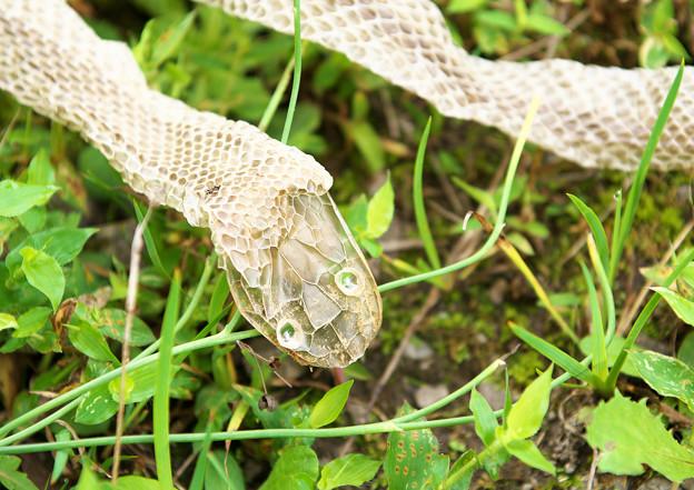 蛇の脱け殻(2)H30,9,18